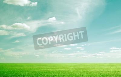 Fototapeta Piękno błękitne niebo i trawa zielona