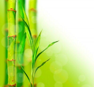Fototapeta Piękny bambus tło z bokeh
