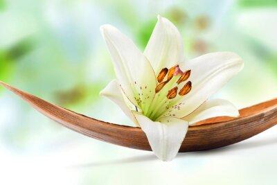 Fototapeta Piękny biały kwiat lilii na liściu palmy kokosowe