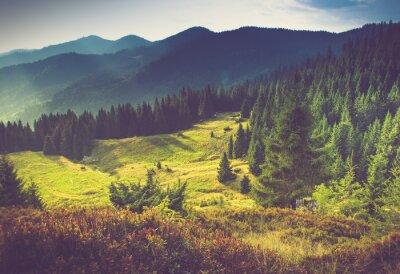 Fototapeta Piękny górski krajobraz lato na słońcu.