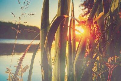 Fototapeta Piękny krajobraz lato z jeziora w tle zachodu słońca oglądany przez kwiatów i trawy.