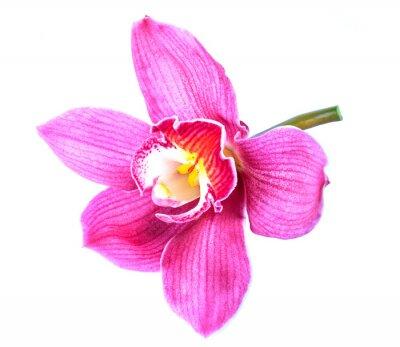 Fototapeta Piękny kwiat Orchid z bliska na białym tle