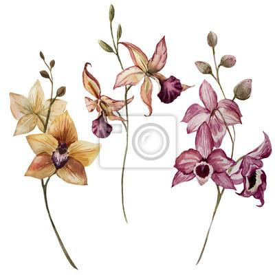 Fototapeta Piękny kwiat orchidei