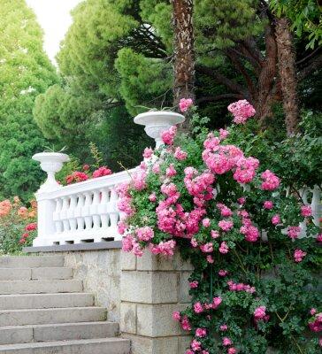 Piękny park z kwitnących róż