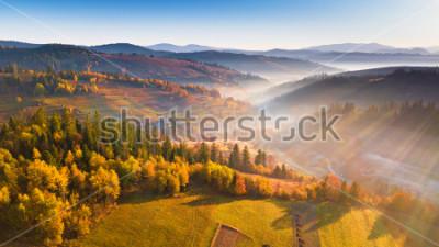 Fototapeta Piękny ranek światło przez mgły i lasu. Halny wschód słońca jesieni krajobraz z łąkowym i kolorowym lasem. Karpaty, Ukraina, Europa
