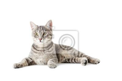 Fototapeta Piękny szary kot wyizolowanych na białym