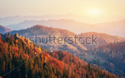 Fototapeta Piękny widok na las w słoneczny dzień. Jesień krajobraz. Karpaty Ukraina, Europa