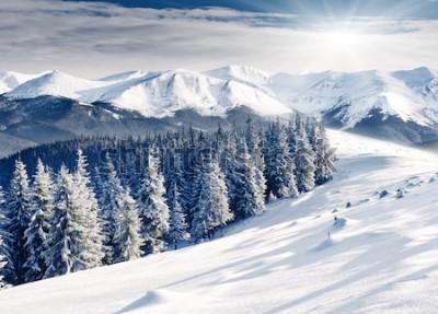 Fototapeta Piękny zima krajobraz z śniegi zakrywającymi drzewami