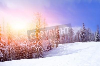 Fototapeta Piękny zimowy krajobraz z drzew pokryte śniegiem