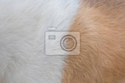 Fototapeta Pies futra tekstury