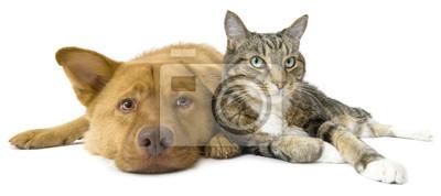 Fototapeta Pies i kot razem szeroki kąt