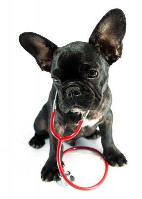 Fototapeta pies i stetoskop