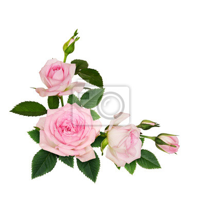 Fototapeta Pink rose flowers corner arrangement