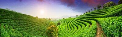 Fototapeta Plantacje herbaty pod niebo
