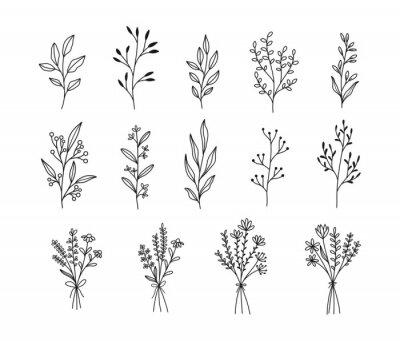 Fototapeta Plants and flowers