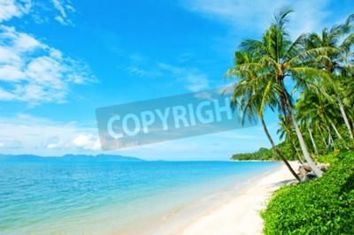 Fototapeta Plaża z palmy na piasku