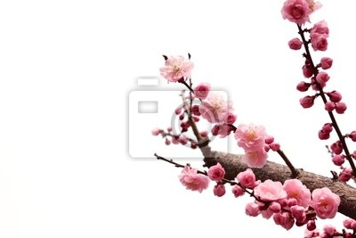 plum gałęzi z kwiatami