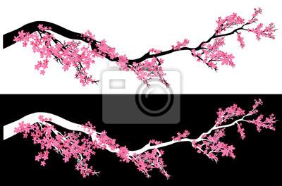 Fototapeta plum tree blossom vector design - chinese springtime meihua flowers on a long horizontal branch