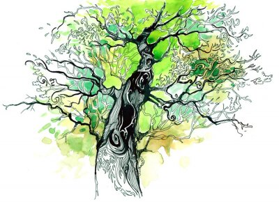 Fototapeta pnia drzewa