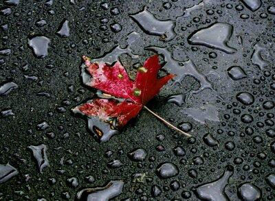 Fototapeta po deszczu