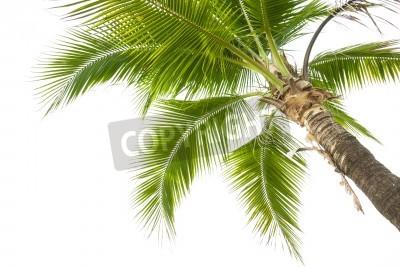 Fototapeta Pod drzewem kokosowym na białym tle.
