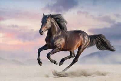 Fototapeta Podpalany koń biega cwał w pustynnym piasku