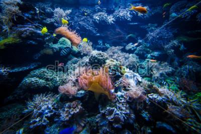 Fototapeta podwodny krajobraz rafy koralowej z kolorowych ryb