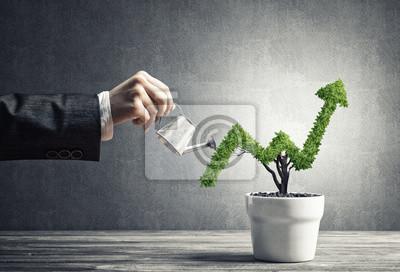 Fototapeta Pojęcie dochodu z inwestycji i wzrostu z drzewa w puli
