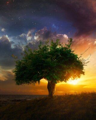 Fototapeta Pojedyncze drzewa na zachodzie słońca