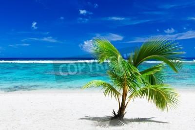 Fototapeta Pojedyncze małe palmy wiszące nad ogłuszania niebieski laguny