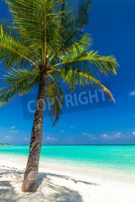 Fototapeta Pojedyncze palmy kokosowe na plaży tropikalnych rzucanie cieniem na piasku