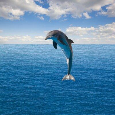 Fototapeta pojedyncze skoki delfinów