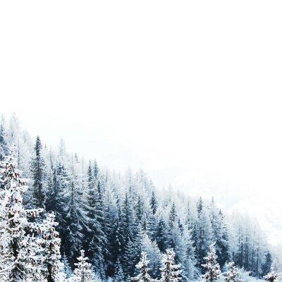 Fototapeta Pokryte śniegiem las