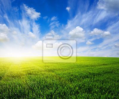 pola i słońce