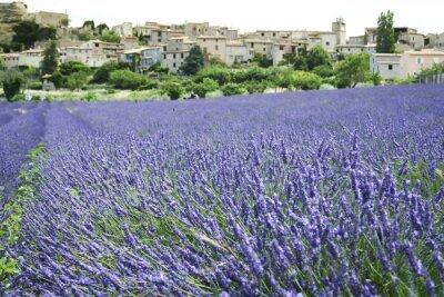 Fototapeta pola lawendy Prowansji Francja wzgórze miasto