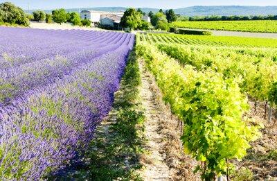 Fototapeta pola lawendy z winnic, Drome, Rhone-Alpes, France