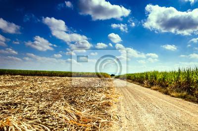 Pola trzciny cukrowej w błękitne niebo