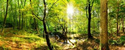 Fototapeta Polanie w lesie z potoku i słońca