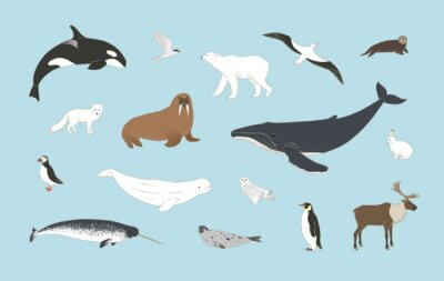 Fototapeta Polar animals set on blue background in vector. Arctic birds and mammals illustration with humpback whale, orca, polar bear, arctic hare, fox, puffin, deer, beluga, owl and more