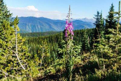 Fototapeta Pole alpejskie świeże zielone łąki i kwitnące kwiaty i lasu zielone górskie szczyty w tle