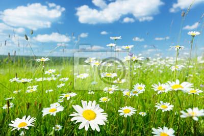 Fototapeta Pole kwiatów letnich