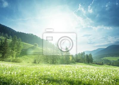 Fototapeta Pole mniszek wiosennych w Dolomitach, Południowym Tyrolu, Włochy