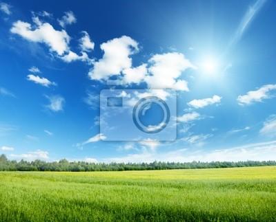 Fototapeta pole owsa i słoneczne niebo
