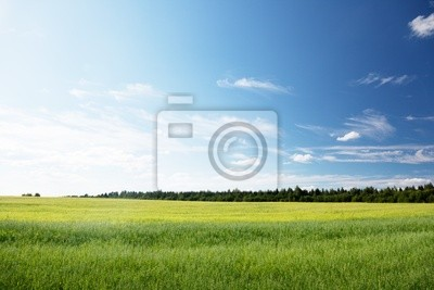 pole owsa i słoneczny dzień