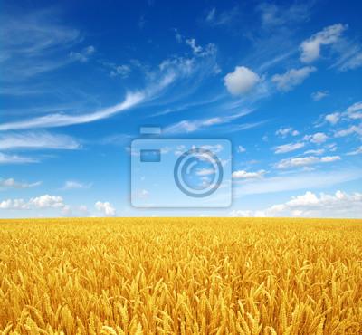 pole pszenicy i niebo