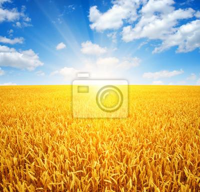 Pole pszenicy i słońce