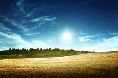 Pole pszenicy w czasie zachodu słońca