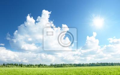 pole trawy i doskonałe niebo