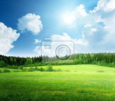 Fototapeta pole trawy i doskonałej niebo