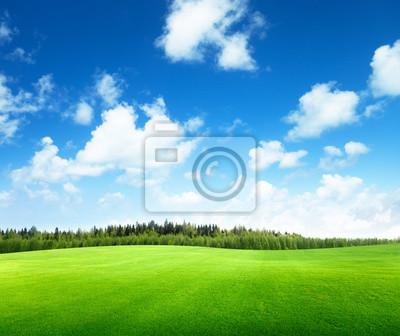Fototapeta pole trawy i niebo idealny